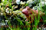 FIAP Deco Active Frog - vodní chrlič