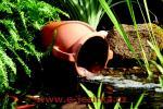 FIAP Deco Active Pottery - vodní chrlič